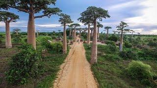 MADAGASCAR   Lemurs, Baobab Trees + Broken Bridges