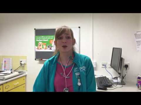 PDSA Vet Nurse Nicole Covus talks about her role at Gillingham Pet Hospital and why she loves working for the charity.