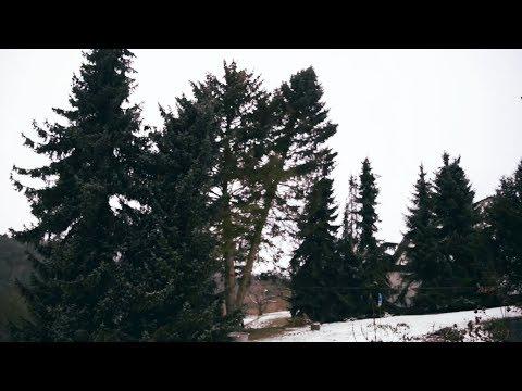 Oh Weihnachtsbaum (Paula Marien)