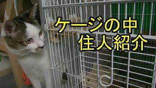 猫のルームメイト?を紹介