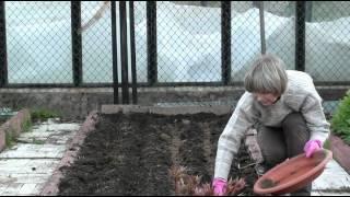Уход за морковью от А до Я видео