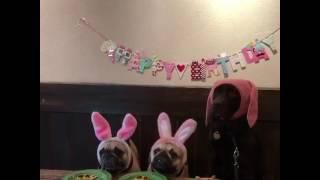 Birthday cake eating gone wrong