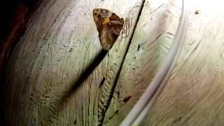 Ловля ночных насекомых на свет