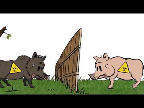 Kā CIC skaidro sabiedrībai kas ir medības....