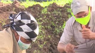 Producción de alimentos en Santiago de Cuba