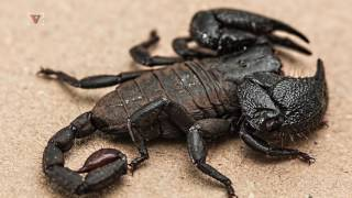 Woman Finds Scorpion in Salad Mix