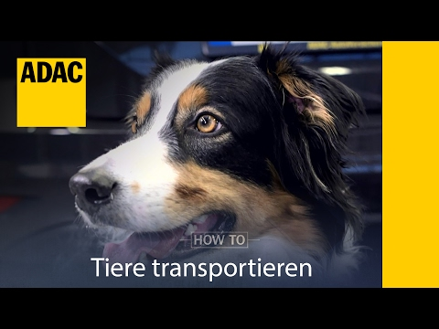 ADAC How To Tiere transportieren I ADAC