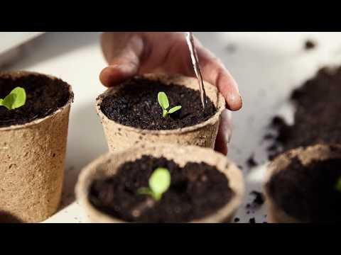jungpflanzen selber ziehen rund ums gem se kurse seminare wissen arche noah. Black Bedroom Furniture Sets. Home Design Ideas