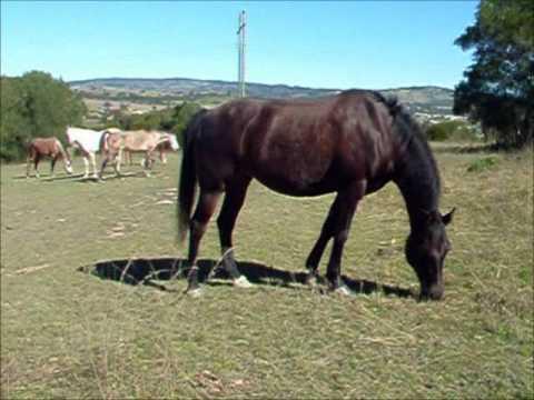 Sonny Wade - Fear The Wild Pony