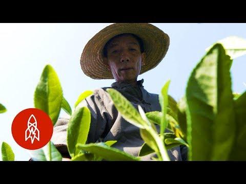 Pěstování dračí studny - Great Big Story