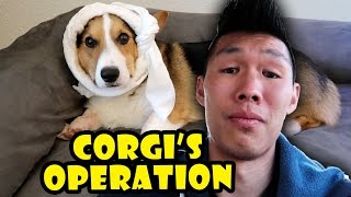 SCARIEST EXPERIENCE EVER - CORGI Root Canal Surgery || Life After College: Ep. 539