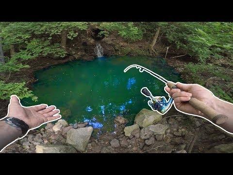 Småfisk i den lille dam