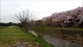 清瀬金山緑地公園横(柳瀬川河川敷)のイメージ