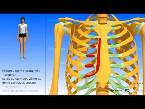 Lensemble des exercices pour les femmes sur tous les groupes des muscles dans les conditions domesti