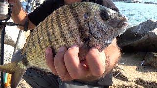 Морская снасть для ловли рыбы