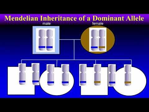 mp4 Medical Genetic, download Medical Genetic video klip Medical Genetic