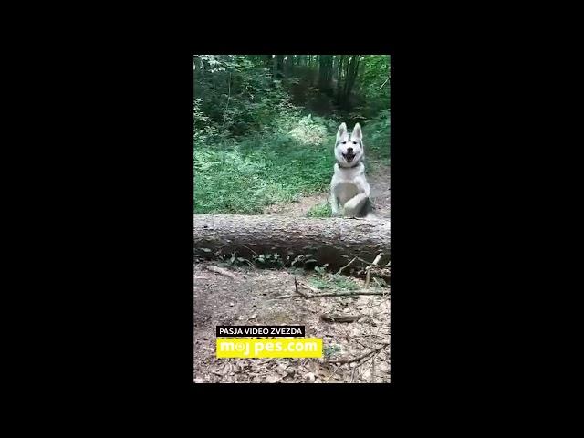Blue – Video natečaj 2020 – Revija Moj Pes #Blue #MojPes