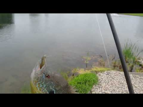FISHING AT A POND FOR GREEN SUNFISH