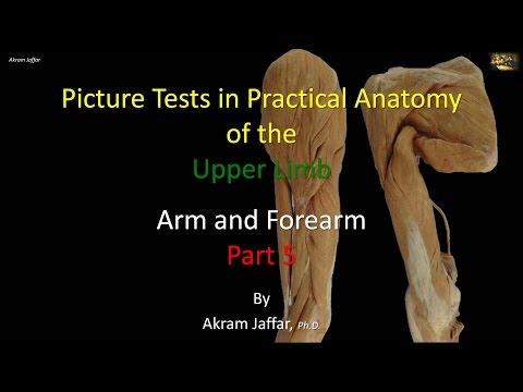 Picture tests in anatomy arm and forearm 5