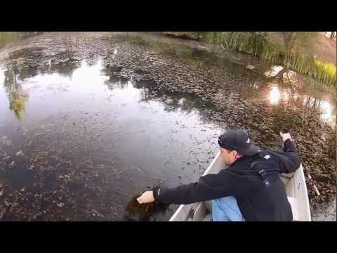 Bass Pond Fishing