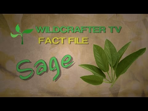 Video Sage Herb Fact File: Uses and Benefits of Sage Herb