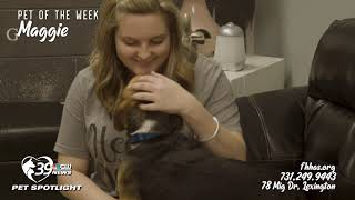 Pet Spotlight shines on another Maggie