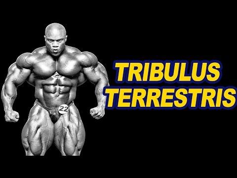 Le forum le bodybuilding les stéroïdes