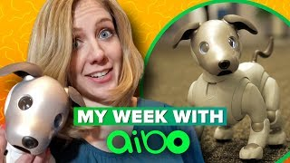 Sony Aibo: what it's like to live with a robot dog