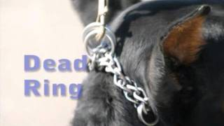 how to put a prong collar