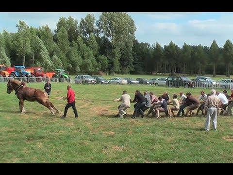 """לשחק """"משוך בחבל"""" עם סוס..."""