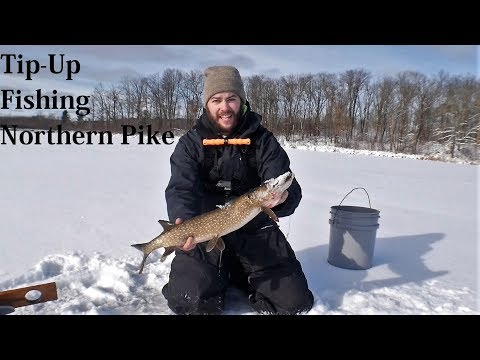 2017 Northern Wisonsin Tip-Up Action!