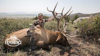 Colorado Archery Elk Hunting Experience