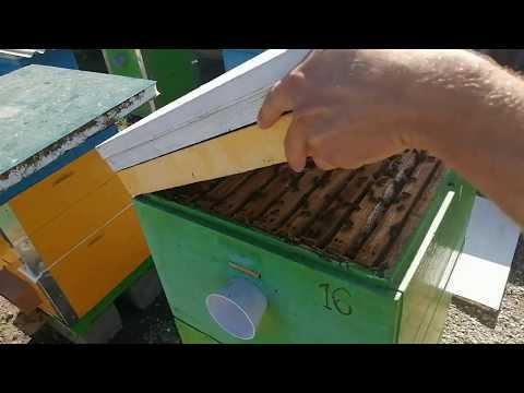 Качнём  Майский мёд а надо не забыть оставить на зиму пчёлам 2020г.