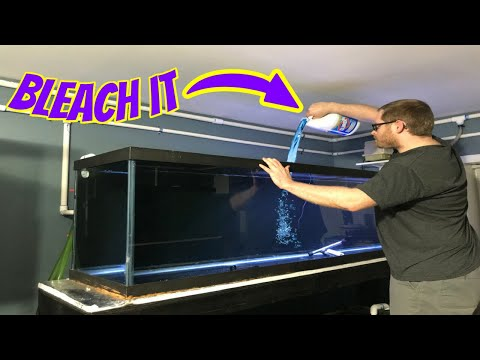 How To Disinfect A Contaminated Fish Tank With Deadly Aquarium Diseases