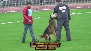 2017 SV BSZS in Ulm TSB part 31 V21 Pepe vom Leithawald