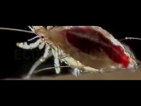 Экстренная схема прививок от гепатита в