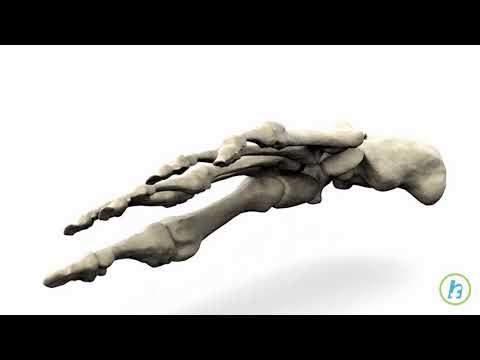 Tratamentul bioptron al artrozei genunchiului