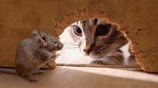 Приколы про кошек и людей самые смешные: мышь гоняет кота [#7]