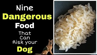 Nine food that is strictly prohibited for your dog // which you give him unknowingly