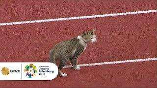 HEBOHH Kucing Di Lintasan Atletik Asian Games 2018, Pertanda Apakah Ini?