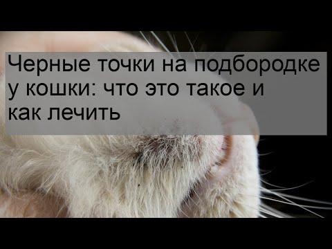 Черные точки на подбородке у кошки: что это такое и как лечить