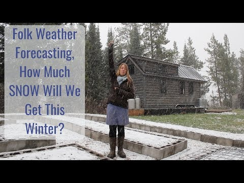 Life in a Tiny House called Fy Nyth - How Much SNOW Will We Get This Year? Folk Weather Forecasting