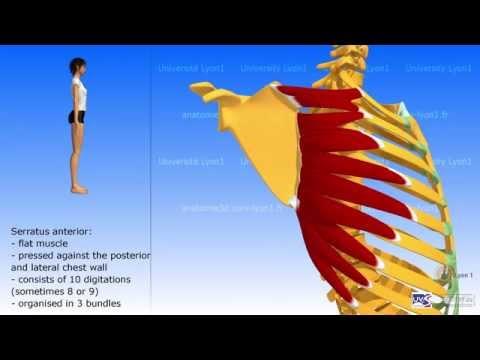 Debolezza temperatura dolori articolari
