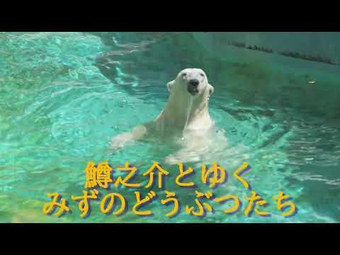天王寺動物園水生動物