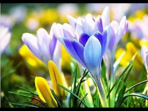 Ностальгия(Frederic Chopin Garden of Eden)(Фредерик Шопен -сад Эдема)
