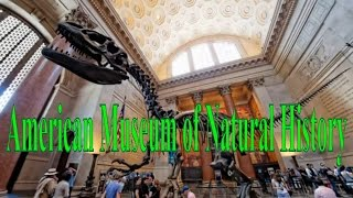 American Museum of Natural History, New York