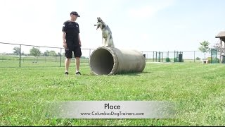 Dog Training: 1 Year Old Siberian Husky, Nanuk! Before/After 2 Week Board and Train!