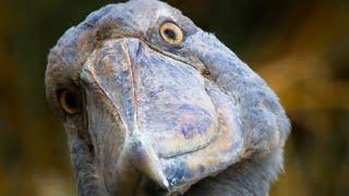 Top 5 David Attenborough Moments | BBC Earth