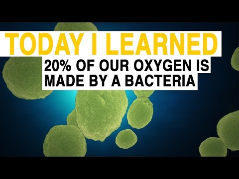 Bacteria that make 20% of all the oxygen on Earth