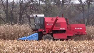 Żniwa kukurydziane vs Bizony